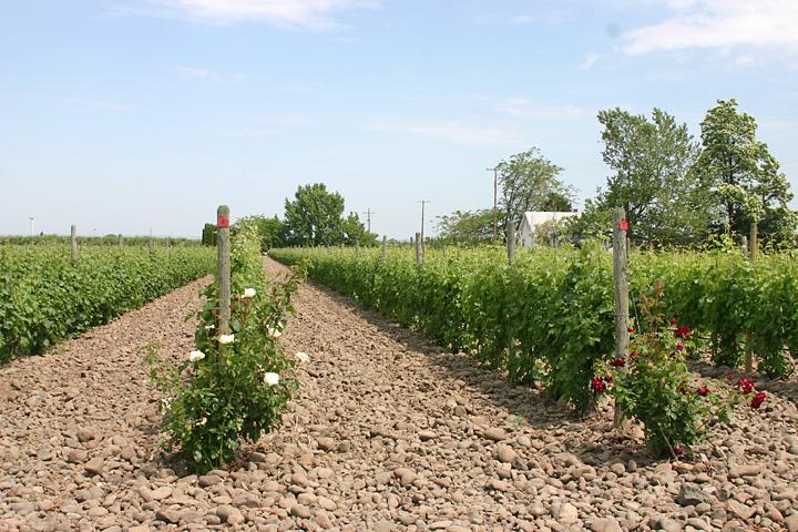 Cayuse vineyards for Cayuse vineyards